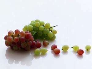 Kincsesbánya a szőlőszemben