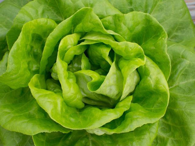Hogyan tartsuk frissen a salátát?