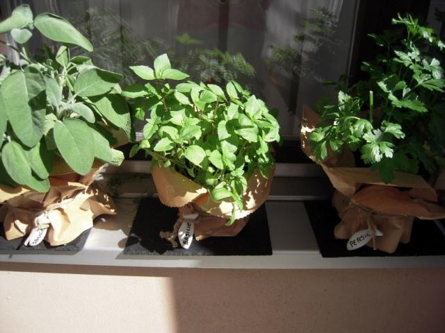 4 biztos tipp zöldfűszereink téliesítésére