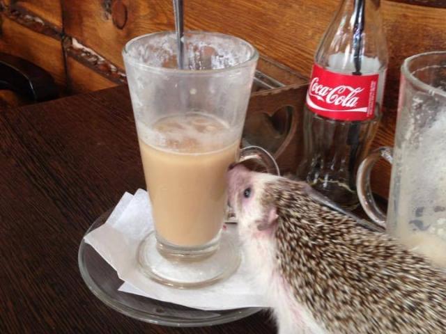 Zoo Café