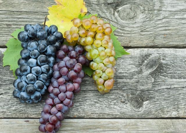 A szőlőmagolaj
