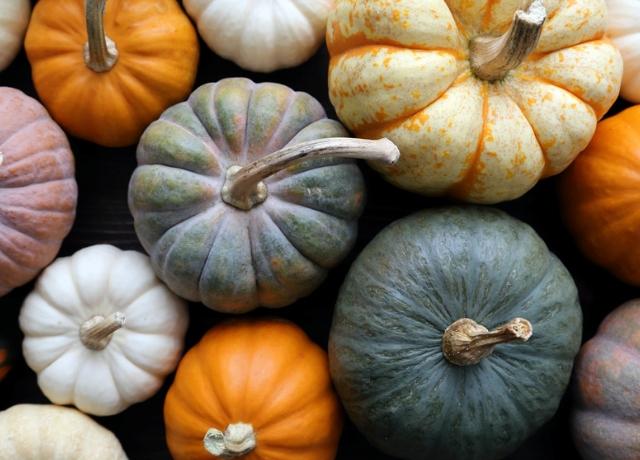Íme a kedvenc őszi kaják rangsora