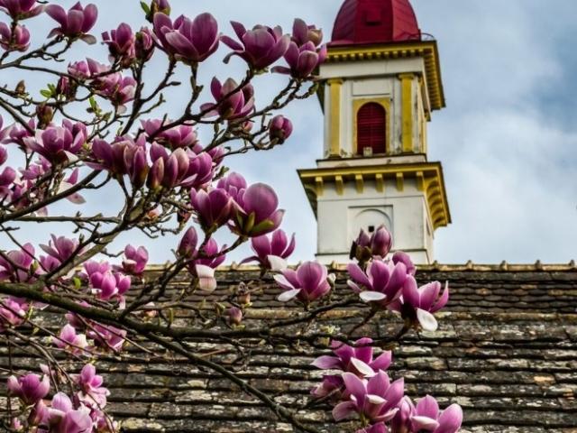 A tavasz egyik legjobban várt gasztroprogramja, a Hú!SVÉT április 22-23-án lesz Palkonyán