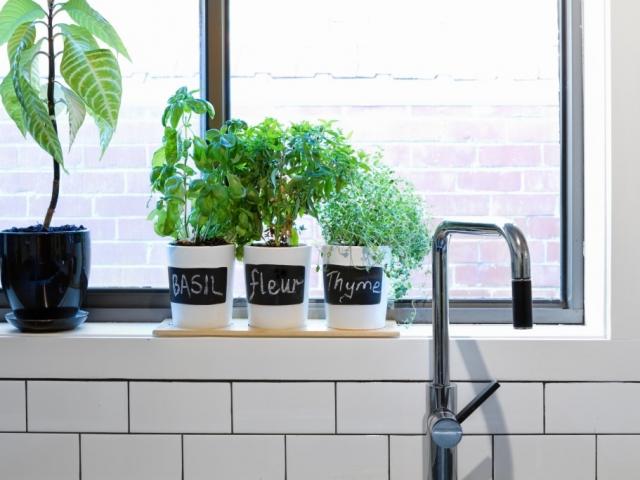 4 ok, hogy kávé filtert tegyünk a virágágyásba