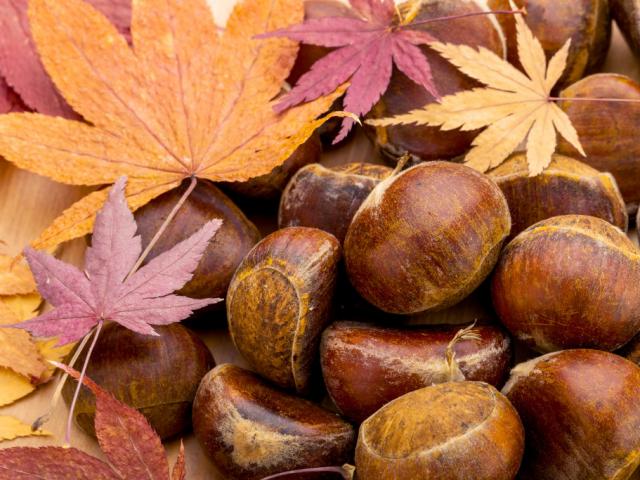 Top 7 kajatrend őszre