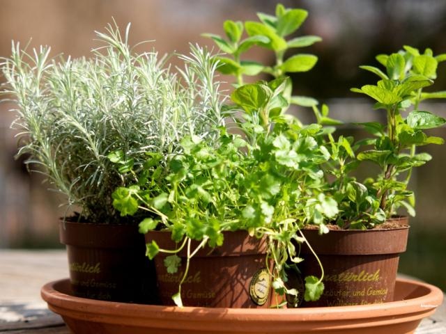 Főzzünk télen is friss fűszernövényekkel!