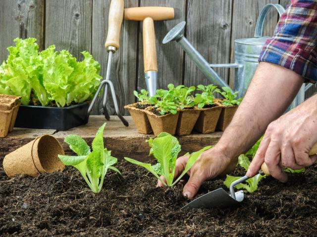 Konyhakerti kisokos – így alakítsuk ki fűszernövényeink lakóhelyét