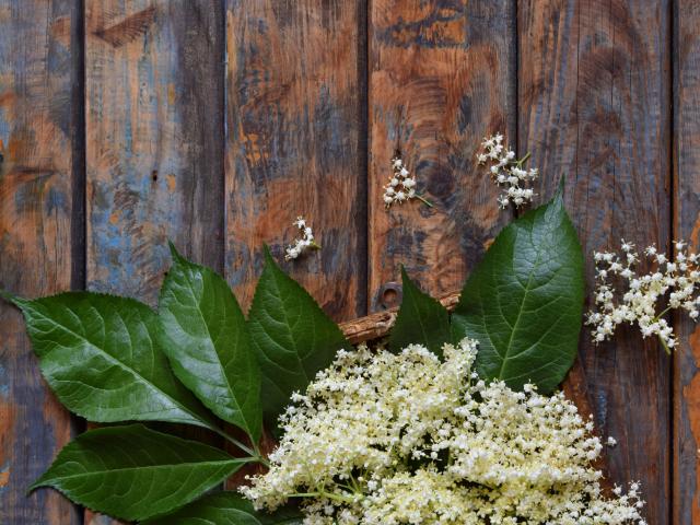 Nyílnak a bodzavirágok! Idén se hagyjátok ki a gyűjtést, mutatjuk, hogy miért érdemes felkutatni a rejtett bodzabokrokat!
