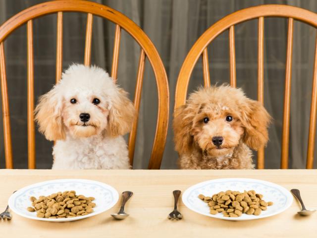 Kutyakaja mítoszok – igen, kutyaétel-trendek is léteznek, de nem kell mindent elhinnünk...