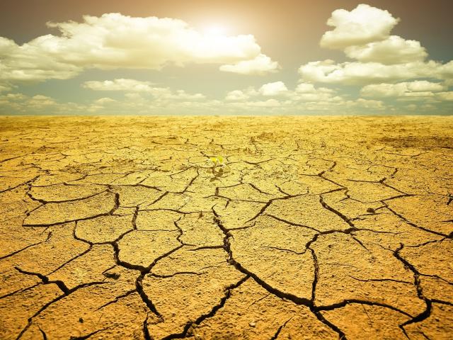 Hogyan hat a hőség a táplálkozásunkra?