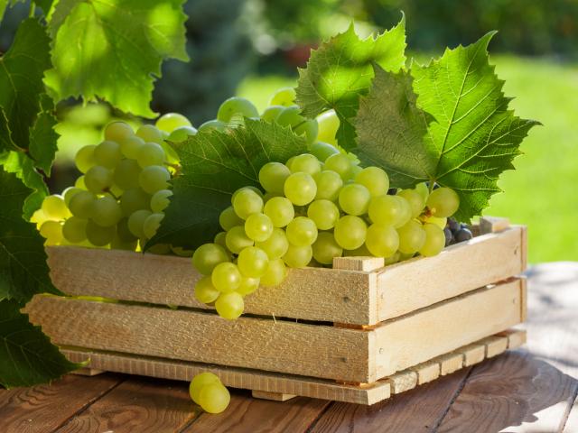 Hogyan tároljuk a szőlőt?