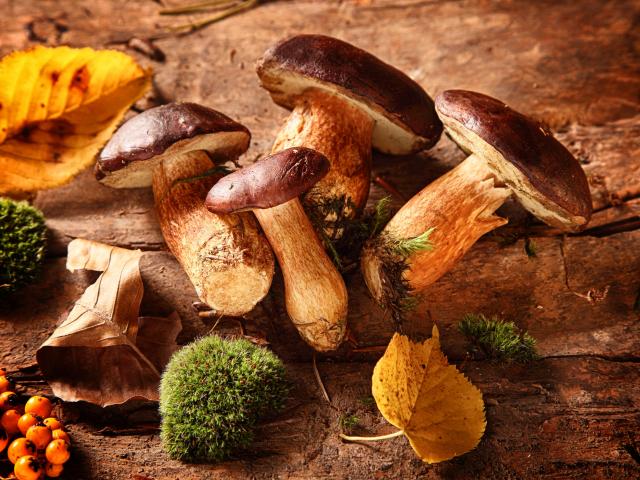 Változatos, egészséges és vitamindús – ilyen az ideális őszi étrend