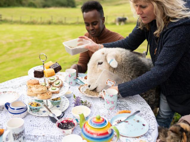 Jöhet egy csésze tea kedves bárányok társaságában?