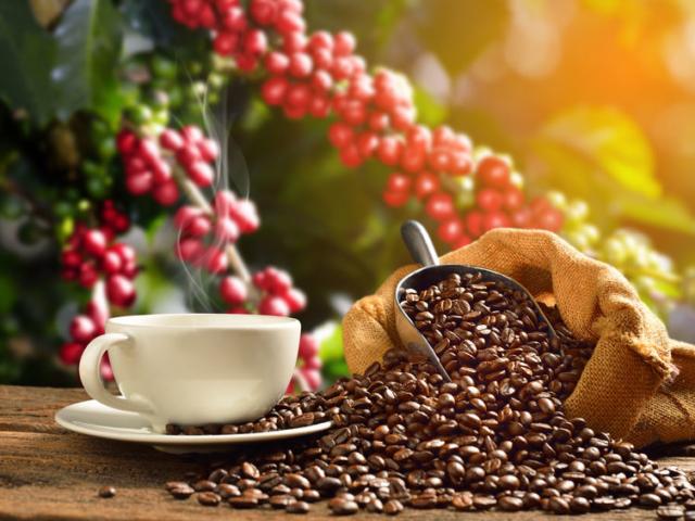 Így reagál a szervezetünk, ha a kávét teára cseréljük