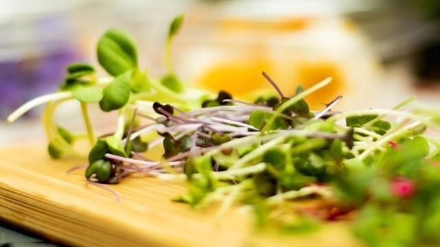 Piciny növénykék, hatalmas íz – mikrozöldekkel az egészségért