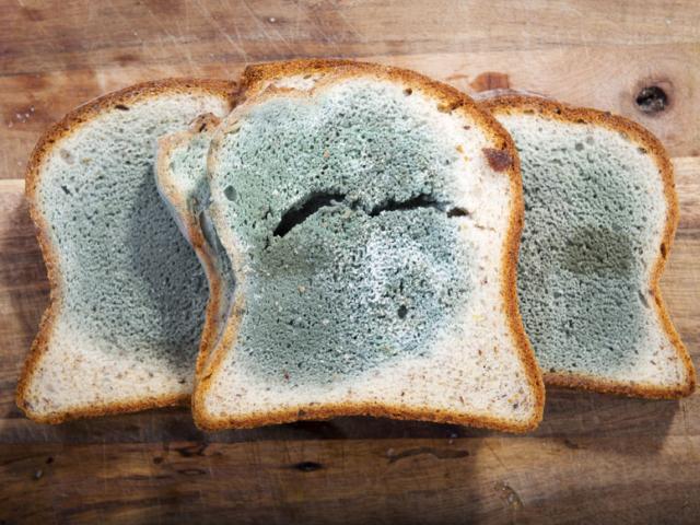 Így óvjuk meg kenyerünket a penésztől