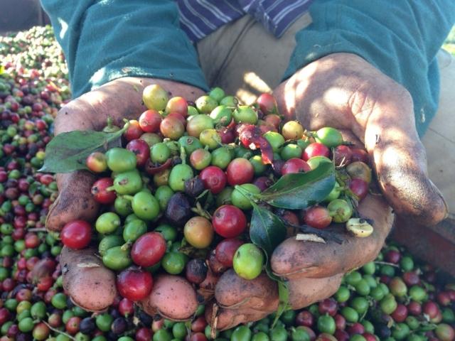 Megéri az árát a specialty kávé? Érdemes áldozni rá, hogy otthon ilyet igyunk?