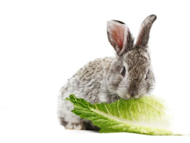 Nyúlkaja a saláta? Dehogy! Ezt add hozzá, hogy igazán tápláló legyen!