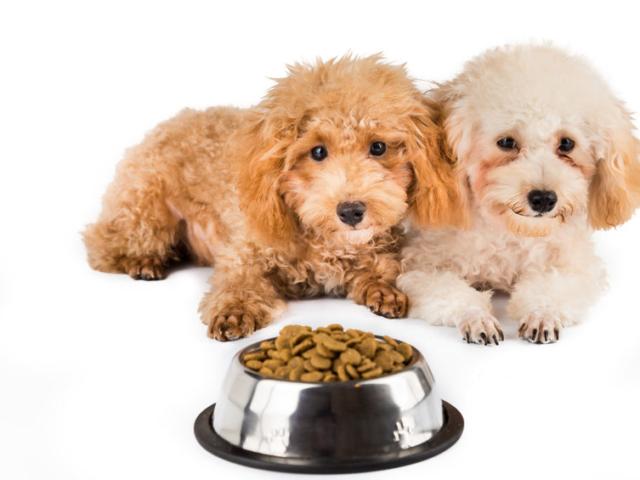 Tudtad? A kutya termetét is fontos figyelembe venni állateledel vásárlásakor