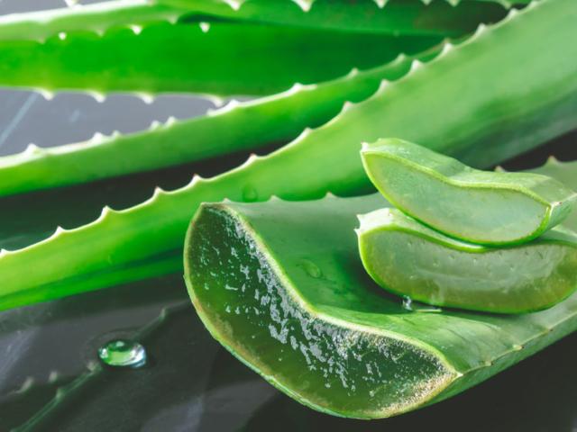 Mi mindenre jó az aloe vera?