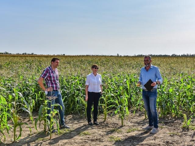 300 millió kukoricakonzerv lett az idei betakarítás eredménye a Bonduelle-nél