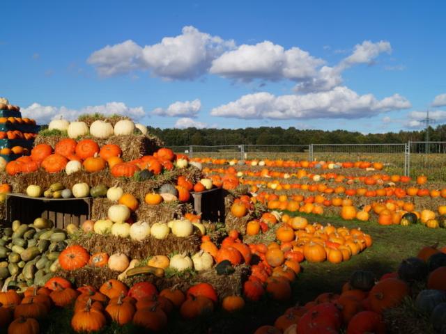 Szereted a sütőtököt? És vajon mindent tudsz kedvenc őszi finomságodról?