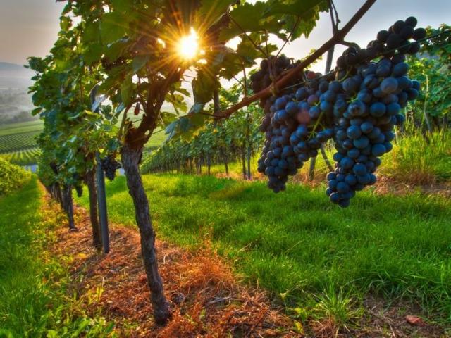 Megválasztották Magyarország legszebb szőlőbirtokait