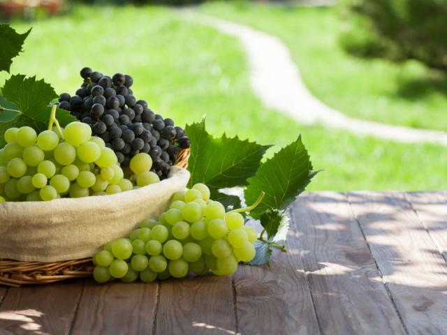 Őszi kedvencünk, a szőlő – mutatjuk, miért roppant egészséges