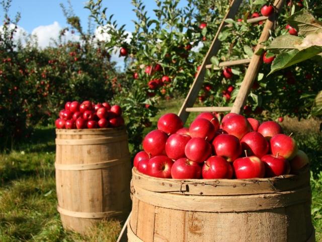 Őszi almák, sziasztok! Mi mindent készíthetsz belőlük? Nem csak desszertet!