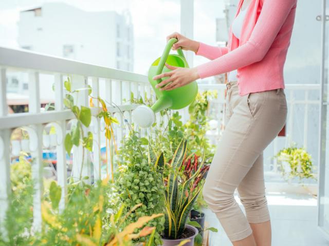 Ezeket a fűszernövényeket érdemes a balkonládában tartani