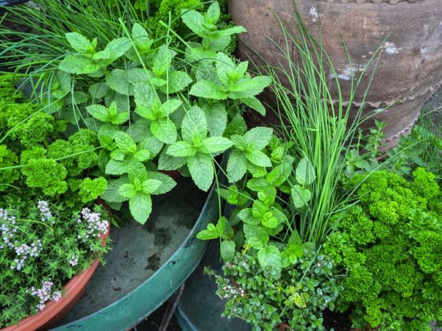 Hogyan gondoskodjunk tavasszal a kerti fűszereinkről?