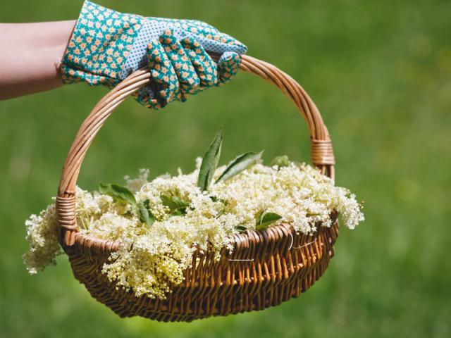 Tudtad, hogy a bodzavirág nem csak szörpnek jó?