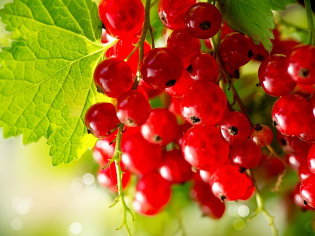 Reggelitől a szörpig – együnk minél több pirosló gyümölcsöt!