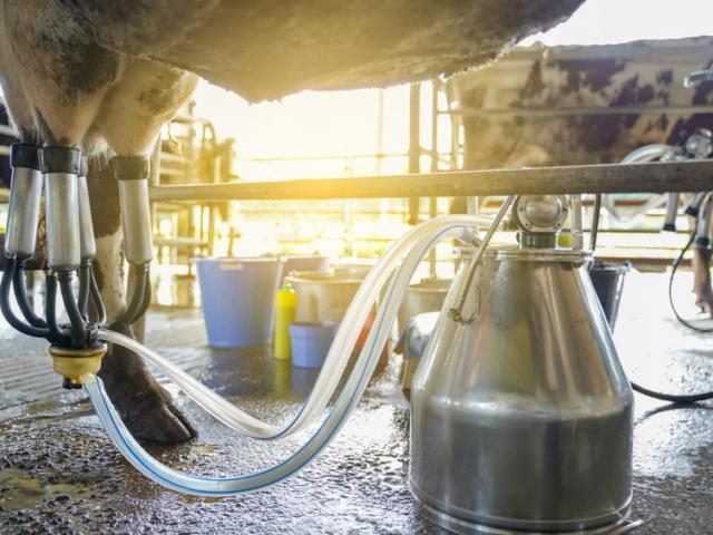 Közel az idő, egy brit milliárdos megjósolta a tej- és húsipar végét?!