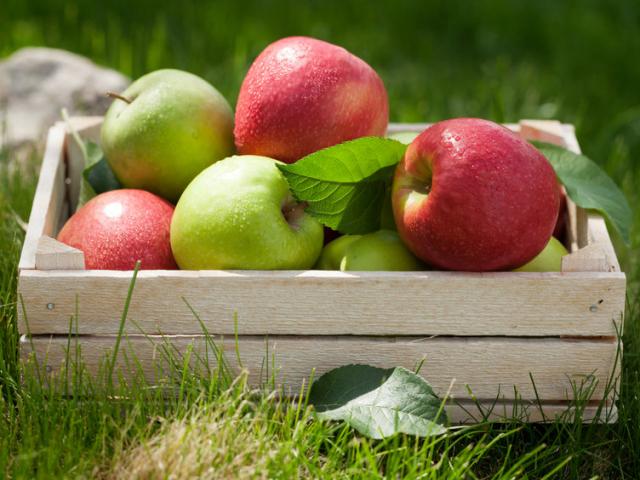 Minden tisztelet az alma-fajtamentő amerikai úrnak!