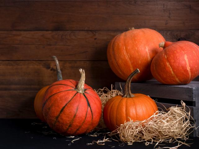 Minden része mérgező a halloween töknek, vagy van olyan, amit bátran megehetsz?